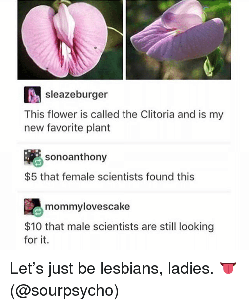 Lesbians, Flower, and Girl Memes: sleazeburger  This flower is called the Clitoria and is my  new favorite plant  喇  sonoanthony  $5 that female scientists found this  $10 that male scientists are still looking  for it. Let's just be lesbians, ladies. 👅 (@sourpsycho)