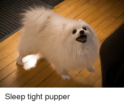 Dank Memes: Sleep tight pupper