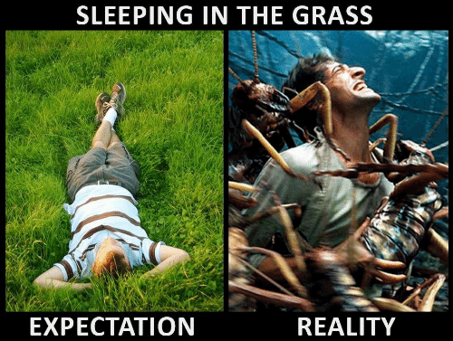 Expectation Reality: SLEEPING IN THE GRASS  EXPECTATION  REALITY