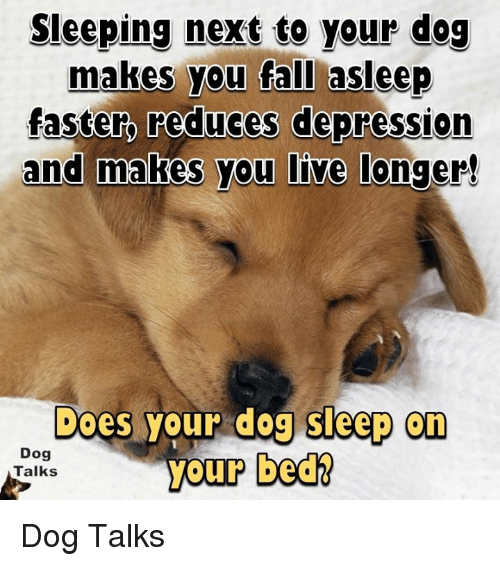 talking dogs: Sleeping next to your dog  makes you fall asleep  faster, reduces depression  and makes you live  longer!  Does your dog sleep on  Dog  your bed  Talks Dog Talks