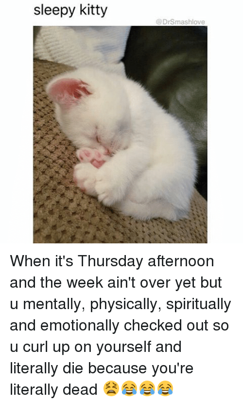physic: sleepy kitty  DrSmashlove When it's Thursday afternoon and the week ain't over yet but u mentally, physically, spiritually and emotionally checked out so u curl up on yourself and literally die because you're literally dead 😫😂😂😂