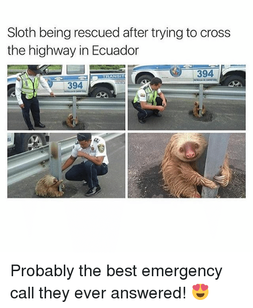 Ecuador: Sloth being rescued after trying to cross  the highway in Ecuador  394  TRANSIT  394  ti  RA Probably the best emergency call they ever answered! 😍