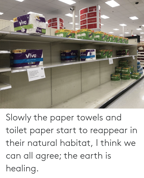 toilet: Slowly the paper towels and toilet paper start to reappear in their natural habitat, I think we can all agree; the earth is healing.