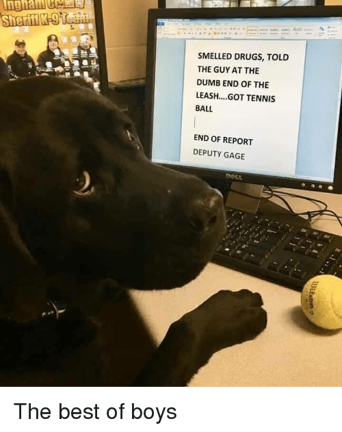 tennis ball: SMELLED DRUGS, TOLD  THE GUY AT THE  DUMB END OF THE  LEASH...GOT TENNIS  BALL  END OF REPORT  DEPUTY GAGE The best of boys