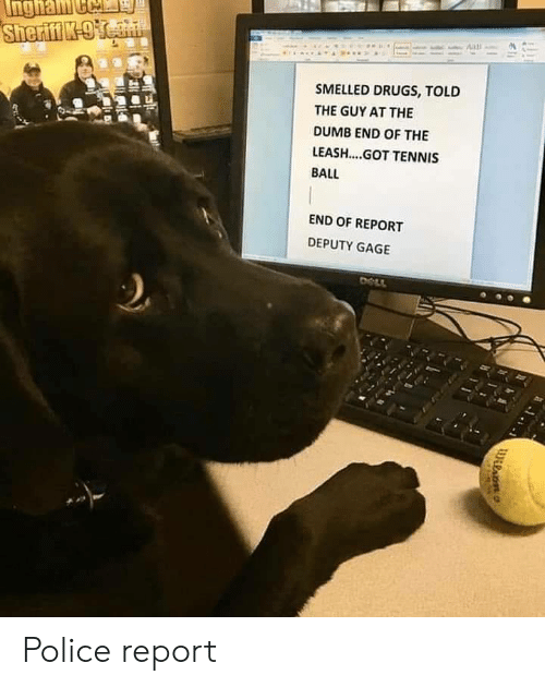 tennis ball: SMELLED DRUGS, TOLD  THE GUY AT THE  DUMB END OF THE  LEASH....GOT TENNIS  BALL  END OF REPORT  DEPUTY GAGE Police report