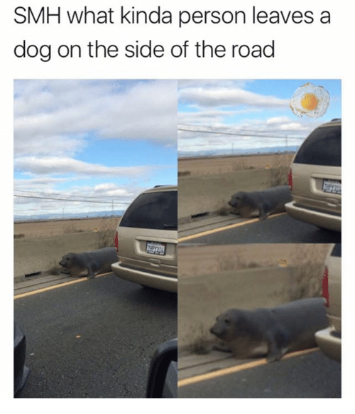 Memes, Smh, and The Road: SMH what kinda person leaves a  dog on the side of the road