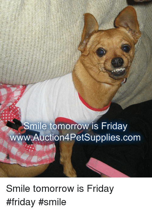 Memes, 🤖, and Tomorrow Is Friday: Smile tomorrow is Friday  www.Auction4PetSupplies.com Smile tomorrow is Friday        #friday  #smile