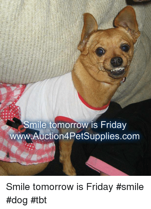 Friday, Memes, and Tbt: Smile tomorrow is Friday  wwW.Auction4Petsupplies.com Smile tomorrow is Friday               #smile #dog #tbt