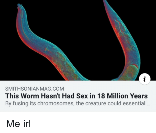 chromosomes: SMITHSONIANMAG.COM  This Worm Hasn't Had Sex in 18 Million Years  By fusing its chromosomes, the creature could essentiall.. Me irl