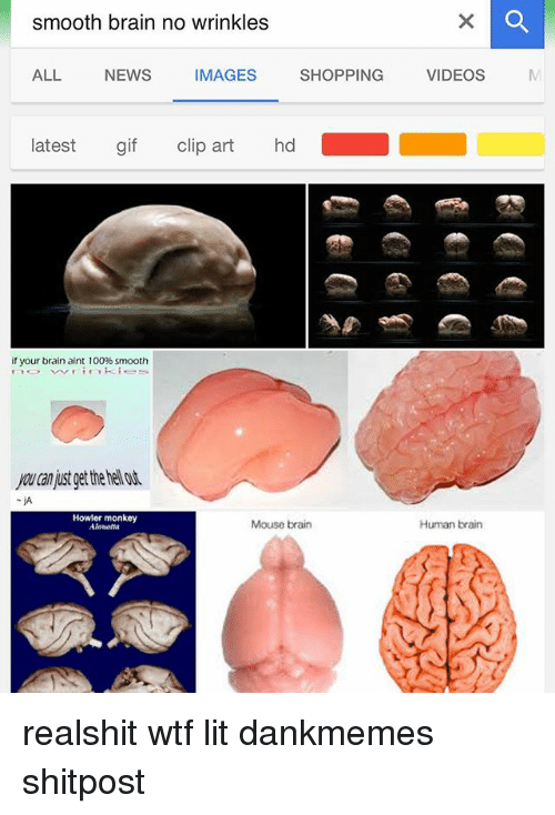 Anaconda, Gif, and Lit: smooth brain no wrinkles  ALL NEWSMAGES SHPPING VIDEOSs  ALL  NEWS  IMAGES  latest gif clip art hd  if your brain aint 100% smooth  you can just get the hel ot  Howler monkey  Alonetta  Mouse brain  Human brain realshit wtf lit dankmemes shitpost
