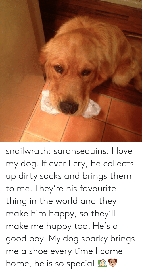 Good: snailwrath:  sarahsequins:  I love my dog. If ever I cry, he collects up dirty socks and brings them to me. They're his favourite thing in the world and they make him happy, so they'll make me happy too. He's a good boy.   My dog sparky brings me a shoe every time I come home, he is so special 🏡🐶