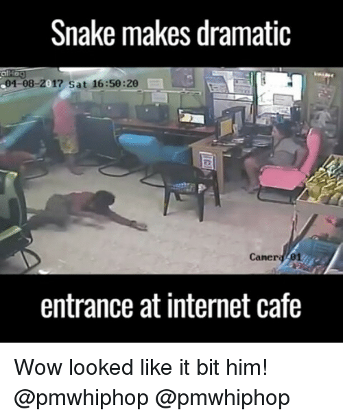 Snake: Snake makes dramatic  S04-08-2017 sat 16:50:20  Caner 01  entrance at internet cafe Wow looked like it bit him! @pmwhiphop @pmwhiphop