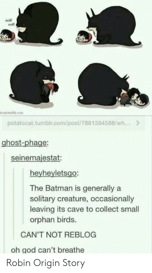 the batman: sniff  sniff  tocat tmublr.cem  potatocat.tumblr.com/post/7881394588/wh...>  ghost-phage  seinemaiestat  heyheyletsgo:  The Batman is generally a  solitary creature, occasionally  leaving its cave to collect small  orphan birds.  CAN'T NOT REBLOG  oh god can't breathe Robin Origin Story