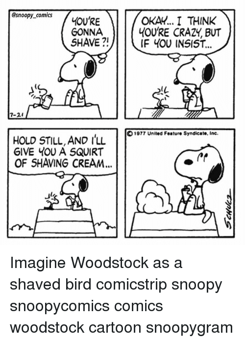 Squirtly: @snoopy_comics  GONNA  SHAVE ?!  OKAY.. I THINK  4OU'RE CRAZY, BUT  IF 4OU INSIST...  IL  7-2  1977 United Feature Syndicate, Inc  HOLD STILL, AND I'LL  GIVE YOU A SQUIRT  11  OF SHAVING CREAM... Imagine Woodstock as a shaved bird comicstrip snoopy snoopycomics comics woodstock cartoon snoopygram
