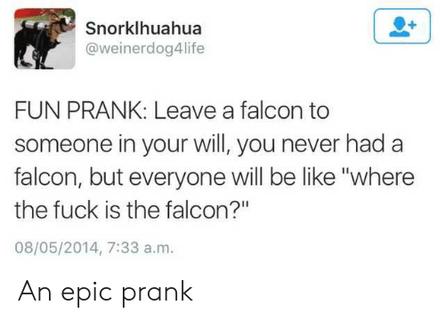 "Fun Prank: Snorklhuahua  @weinerdog4life  FUN PRANK: Leave a falcon to  someone in your will, you never had a  falcon, but everyone will be like ""where  the fuck is the falcon?""  08/05/2014, 7:33 a.m. An epic prank"