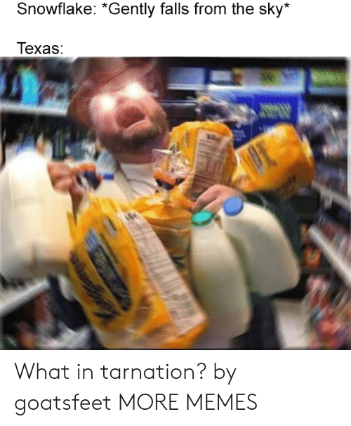 What In Tarnation: Snowflake: *Gently falls from the sky*  Texas: What in tarnation? by goatsfeet MORE MEMES