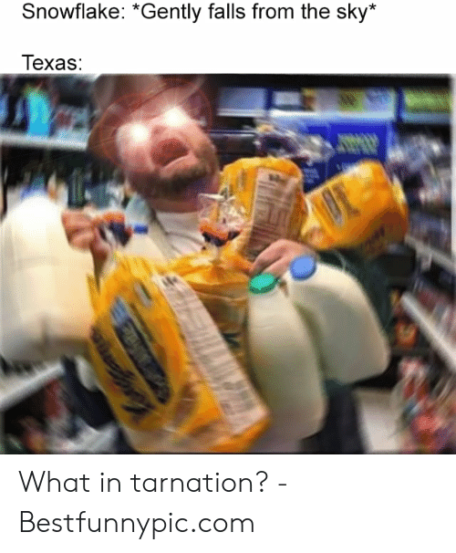 Bestfunnypic: Snowflake: *Gently falls from the sky*  Texas: What in tarnation? - Bestfunnypic.com