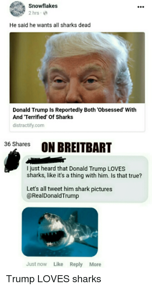 Donald Trump, Politics, and True: Snowflakes  2 hrs e  He said he wants all sharks dead  Donald Trump Is Reportedly Both 'Obsessed' With  And Terrified Of Sharks  distractify.com  36 Shares  ON BREITBART  I just heard that Donald Trump LOVES  sharks, like it's a thing with him. Is that true?  Let's all tweet him shark pictures  @RealDonaldTrump  Just now Like Reply More