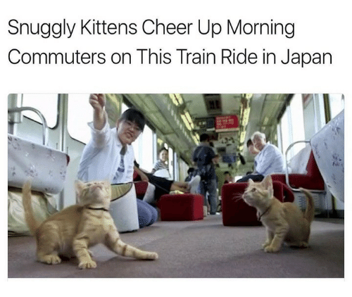 train ride: Snuggly Kittens Cheer Up Morning  Commuters on This Train Ride in Japan