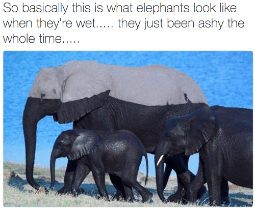 Elephants: So basically this is what elephants look like  when they're wet..... they just been ashy the  whole time.....