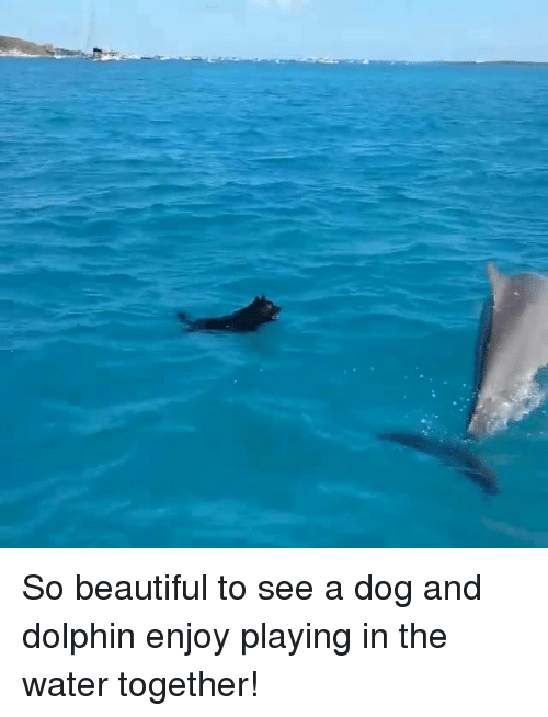 Dolphin: So beautiful to see a dog and dolphin enjoy playing in the water together!