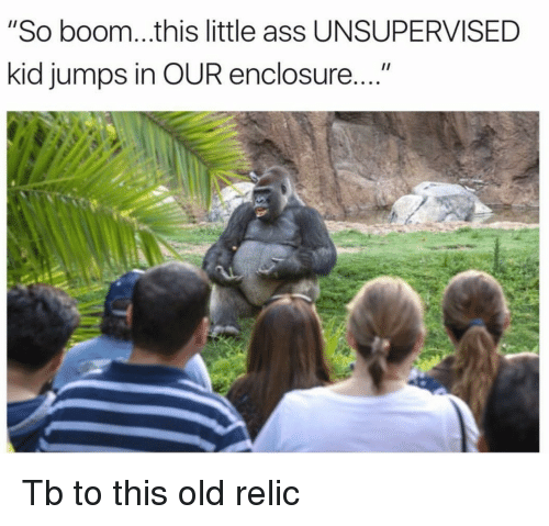 """relic: """"So boom...this little ass UNSUPERVISED  kid jumps in OUR enclosure... <p>Tb to this old relic</p>"""