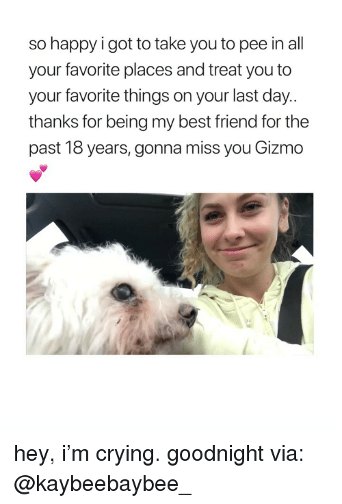 gizmo: so happy i got to take you to pee in all  your favorite places and treat you to  your favorite things on your last day  thanks for being my best friend for the  past 18 years, gonna miss you Gizmo hey, i'm crying. goodnight via: @kaybeebaybee_