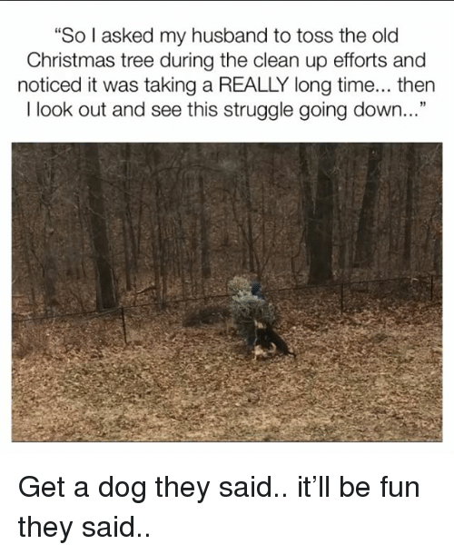 "Christmas, Memes, and Struggle: ""So I asked my husband to toss the old  Christmas tree during the clean up efforts and  noticed it was taking a REALLY long time... then  I look out and see this struggle going down..."" Get a dog they said.. it'll be fun they said.."