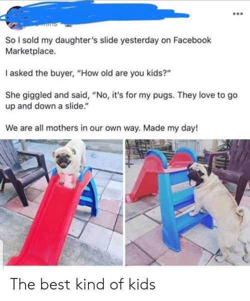 """Pugs: So I sold my daughter 's slide yesterday on Facebook  Marketplace.  I asked the buyer, """"How old are you kids?""""  She giggled and said, """"No, it's for my pugs. They love to go  up and down a slide.""""  We are all mothers in our own way. Made my day! The best kind of kids"""