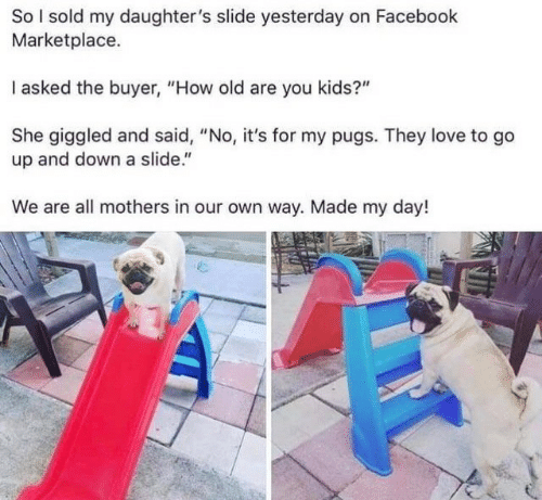"""Pugs: So I sold my daughter's slide yesterday on Facebook  Marketplace.  I asked the buyer, """"How old are you kids?""""  She giggled and said, """"No, it's for my pugs. They love to go  up and down a slide.""""  We are all mothers in our own way. Made my day!"""