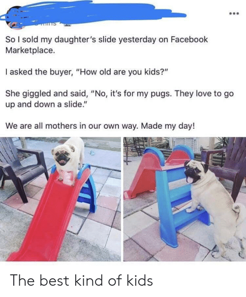 """Pugs: So I sold my daughter's slide yesterday on Facebook  Marketplace.  I asked the buyer, """"How old are you kids?""""  She giggled and said, """"No, it's for my pugs. They love to go  up and down a slide.""""  We are all mothers in our own way. Made my day! The best kind of kids"""