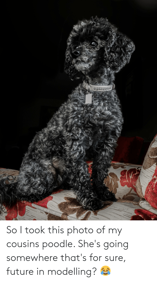 modelling: So I took this photo of my cousins poodle. She's going somewhere that's for sure, future in modelling? 😂