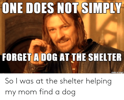 find a: So I was at the shelter helping my mom find a dog