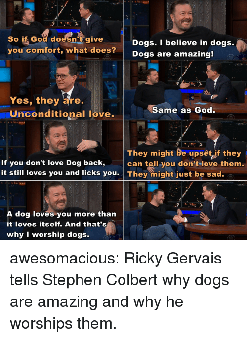 Ricky Gervais: So if God doesn't give  you comfort, what does?  Dogs. I believe in dogs.  Dogs are amazing  Yes, they are.  Uinconditional love.  Same as God  They might be upset if they  can tell you don tlove them.  If you don't love Dog back,  it still loves you and licks you They might just be sad.  A dog loves you more than  it loves itself. And that's  why I worship dogs. awesomacious:  Ricky Gervais tells Stephen Colbert why dogs are amazing and why he worships them.