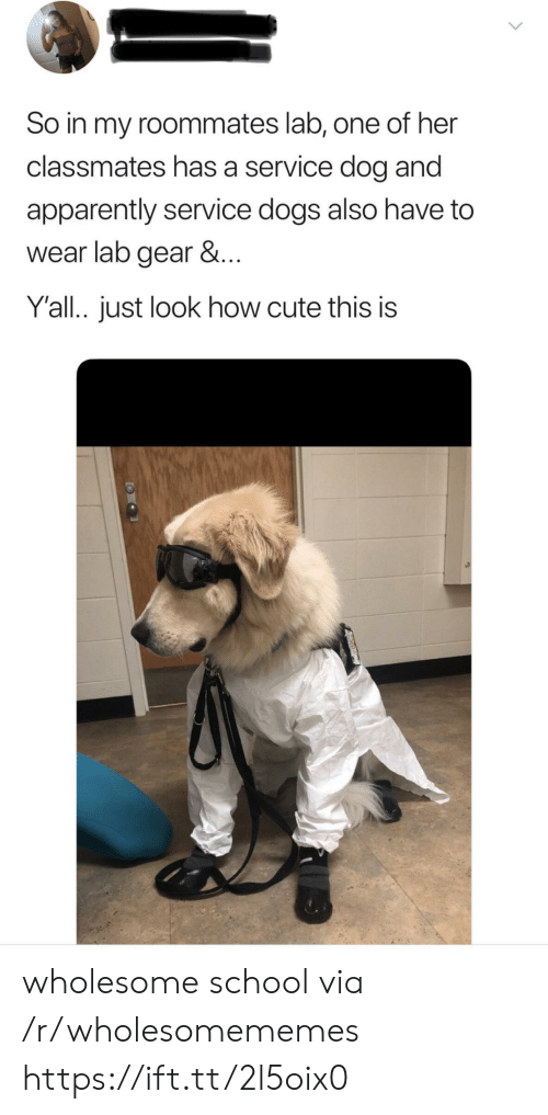 roommates: So in my roommates lab, one of her  classmates has a service dog and  apparently service dogs also have to  wear lab gear &...  Y'all.. just look how cute this is wholesome school via /r/wholesomememes https://ift.tt/2l5oix0