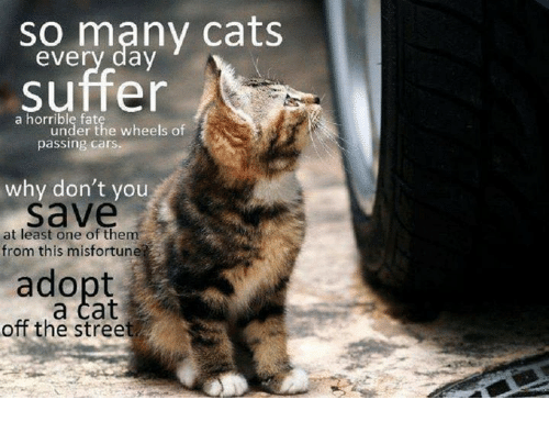 Misfortunately: so many cats  every day  suffer  a horrible fat  under the wheels of  passing cars.  why don't you  save  at least one of them  from this misfortun  adopt  off the street  a cat