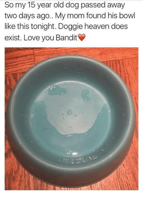 Dank, Heaven, and Moms: So my 15 year old dog passed away  two days ago.. mom found his bowl  like this tonight. Dog  heaven does  exist. Love you Bandit