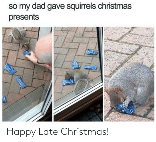 squirrels: so my dad gave squirrels christmas  presents Happy Late Christmas!