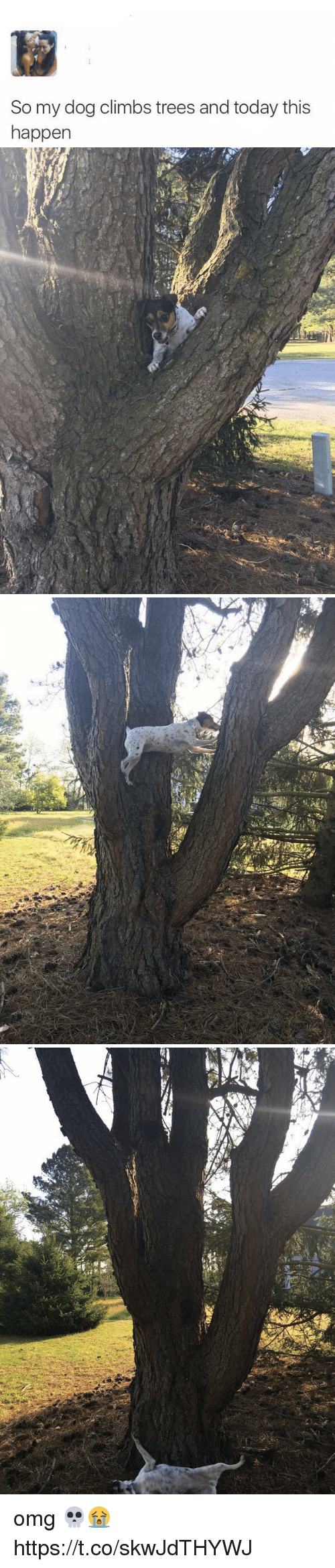 Omg, Today, and Trees: So my dog climbs trees and today this  happen omg 💀😭 https://t.co/skwJdTHYWJ