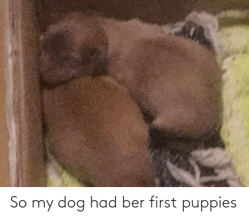 ber: So my dog had ber first puppies