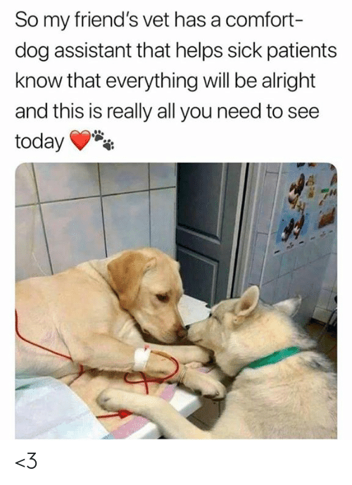 Patients: So my friend's vet has a comfort-  dog assistant that helps sick patients  know that everything will be alright  and this is really all you need to see  today <3