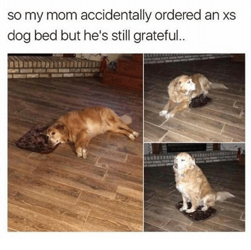 dog bed: so my mom accidentally ordered an xs  dog bed but he's still grateful