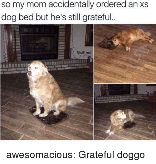 dog bed: so my mom accidentally ordered an xs  dog bed but he's still grateful  @will_ent awesomacious:  Grateful doggo