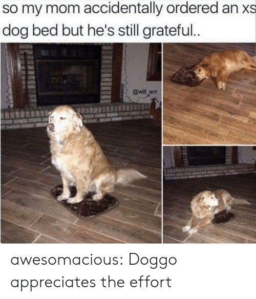 dog bed: so my mom accidentally ordered an xs  dog bed but he's still grateful.  @will ent awesomacious:  Doggo appreciates the effort
