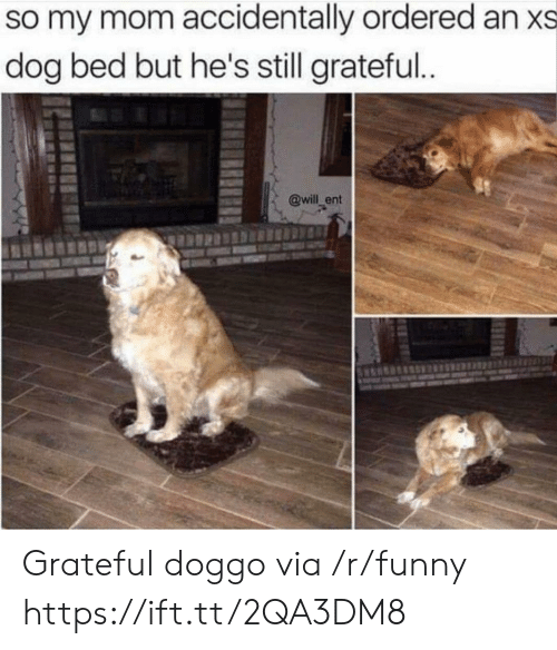 dog bed: so my mom accidentally ordered an xs  dog bed but he's still grateful  @will_ent Grateful doggo via /r/funny https://ift.tt/2QA3DM8