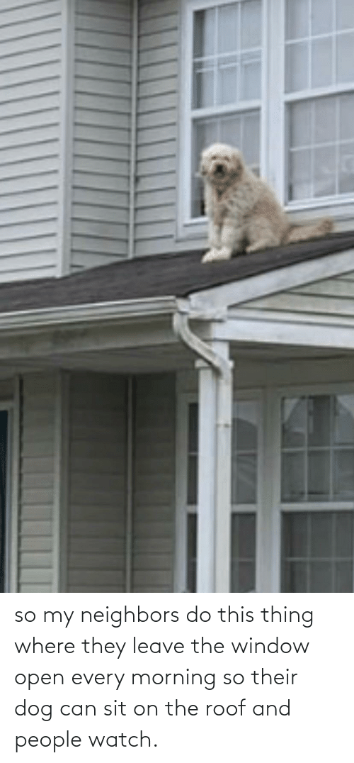 Sit: so my neighbors do this thing where they leave the window open every morning so their dog can sit on the roof and people watch.