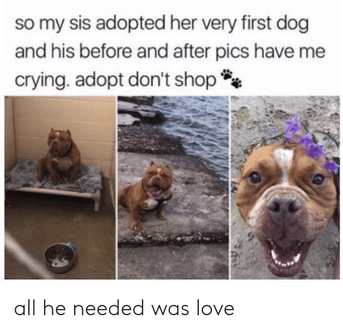 sis: so my sis adopted her very first dog  and his before and after pics have me  crying. adopt don't shop all he needed was love