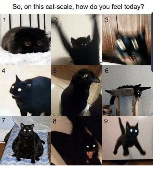 scale: So, on this cat-scale, how do you feel today?  4  6.  8. ⠀ ⠀ ⠀ ⠀ ⠀ ⠀ ⠀ ⠀ ⠀