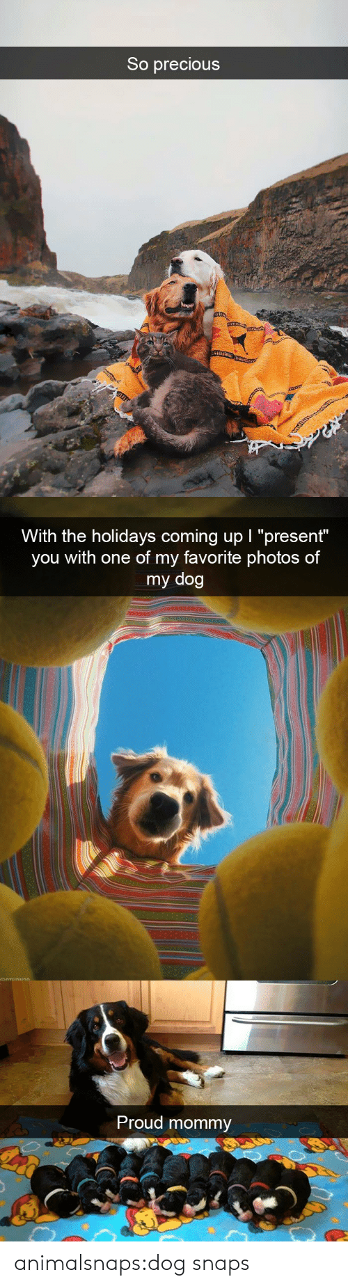 """the holidays: So precious   With the holidays coming up I """"present""""  you with one of my favorite photos of  my dog   Proud mommy animalsnaps:dog snaps"""