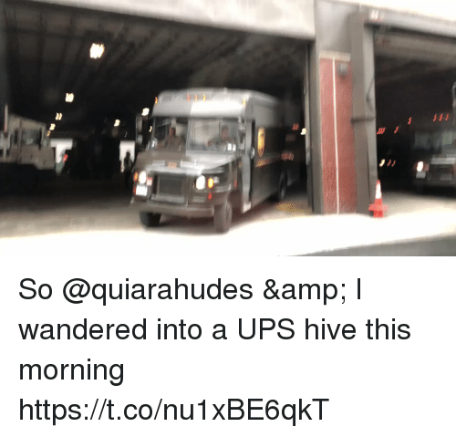 hive: So @quiarahudes & I wandered into a UPS hive this morning https://t.co/nu1xBE6qkT